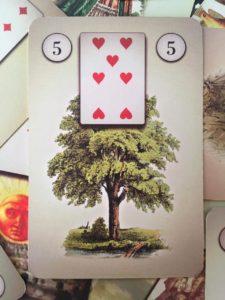 значение дома карты Дерево в колоде Ленорман